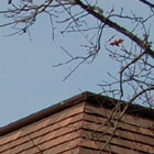Traditional Terracotta Shingles Mitred